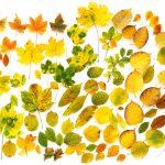Drentse herfst