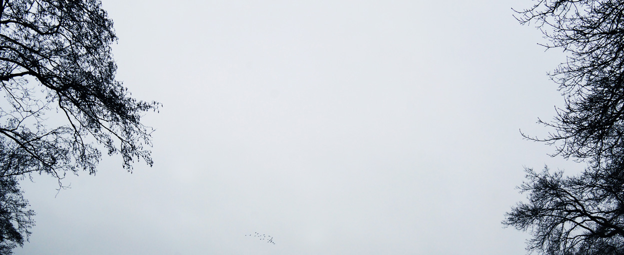 Gerda Bontsema | drents landschap in januari