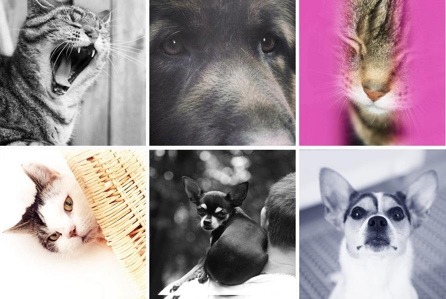 katten en honden van Gerda Bontsema op instagram