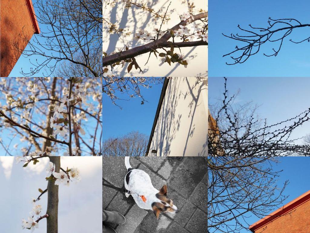 21 maart de lente is begonnen