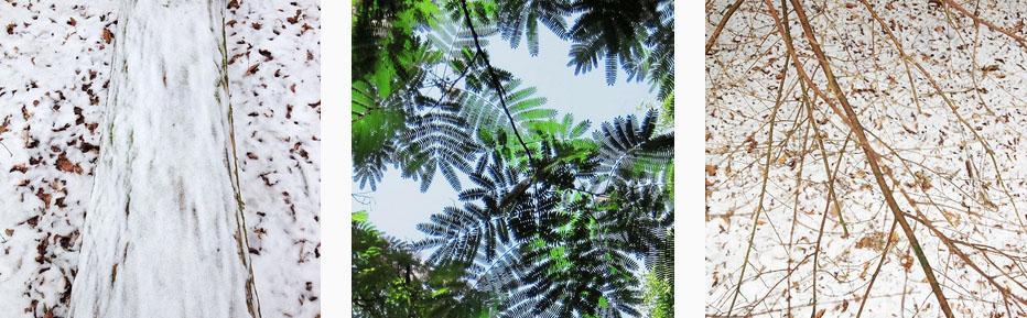 Wie houdt er nu niet van bomen? Gerda Bontsema blogt hierover.