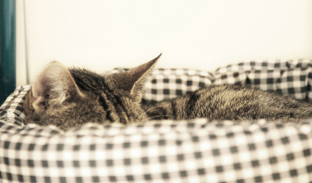 Wat een fijne bezigheid, slapen.