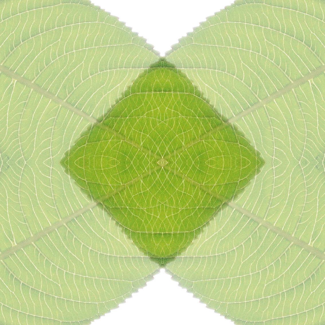 Bladspe. De structuur en de lijnen van dit blad zijn prachtig. Daar kun je mee spelen.