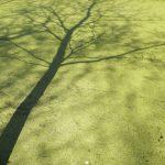 Groene schaduw