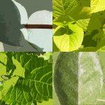 Groen groener groenst